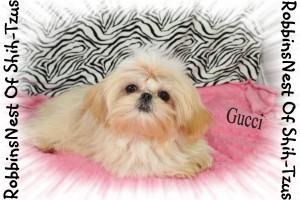 Gucci_122714 005