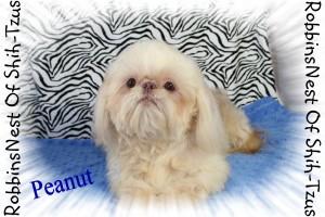 Peanut_42813 011