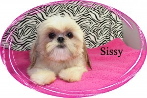 Sissy_102812